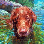 Swimming-Dog-1.jpg